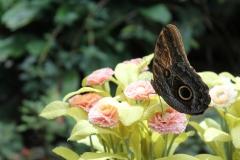 Casa-delle-farfalle-Montegrotto-Padova-2