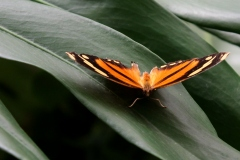 Casa-delle-farfalle-Montegrotto-Padova-3