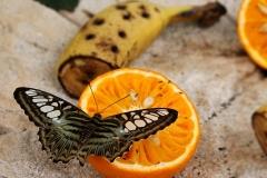 Casa-delle-farfalle-Montegrotto-Padova-4