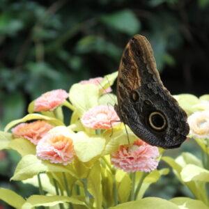 Casa-delle-farfalle-Montegrotto-Padova-insta